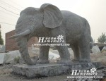 复件 大象